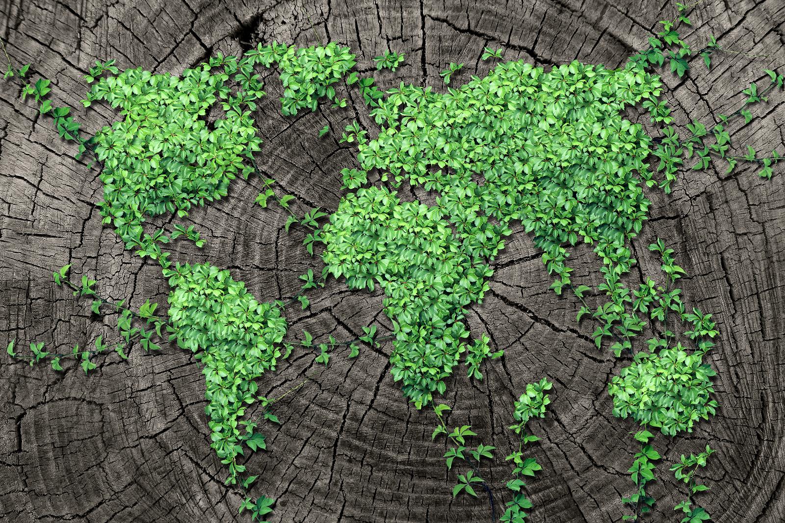 Decalogo Green